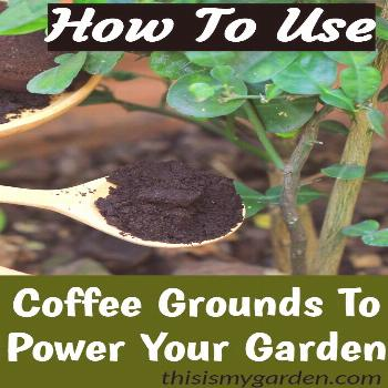 How To Power Your Garden, Flowerbeds, and Perennials With Coffee Grounds.